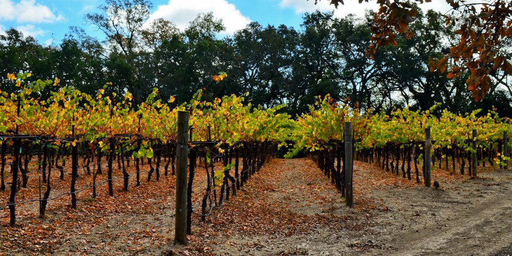 California vineyard - Free Laundry Day